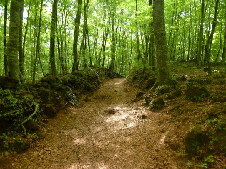 Caminando por la Zona Volcánica (9). Les Preses – Coll Bassols (volcán santa Margarida)