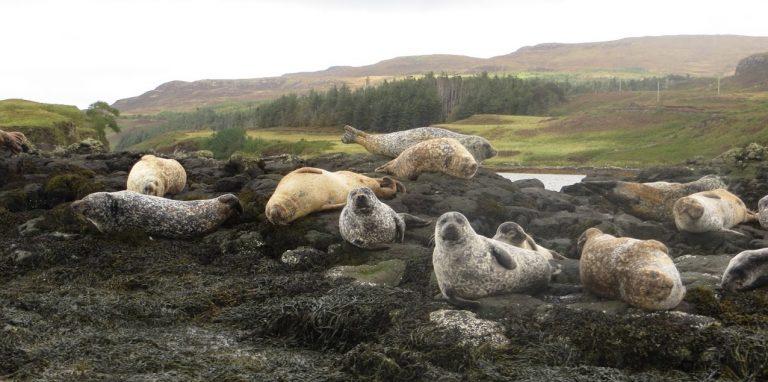 LAS HÉBRIDAS. En busca de focas