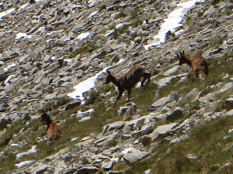 Vallter, pic de la Dona (2702 m.), pic de Bastiments (2881 m.)