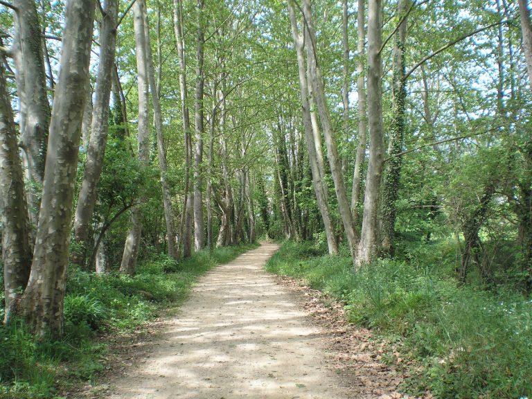 El Camino de Santiago en la Catalunya (La Garrotxa). Amer, sant Esteve d'en Bas (Etapa 5)