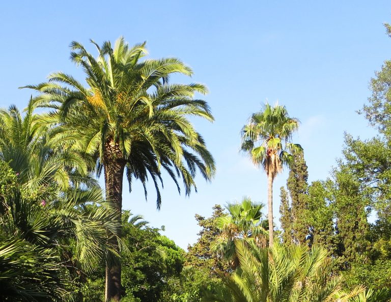Jardín Botánico de Blanes Mar i Murtra 27/07/2017