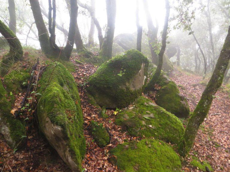 Sant Joan les Fonts, la Cau, puig de la Cau, cresta de Malforat, coll de Passaserres, Vall de Bianya