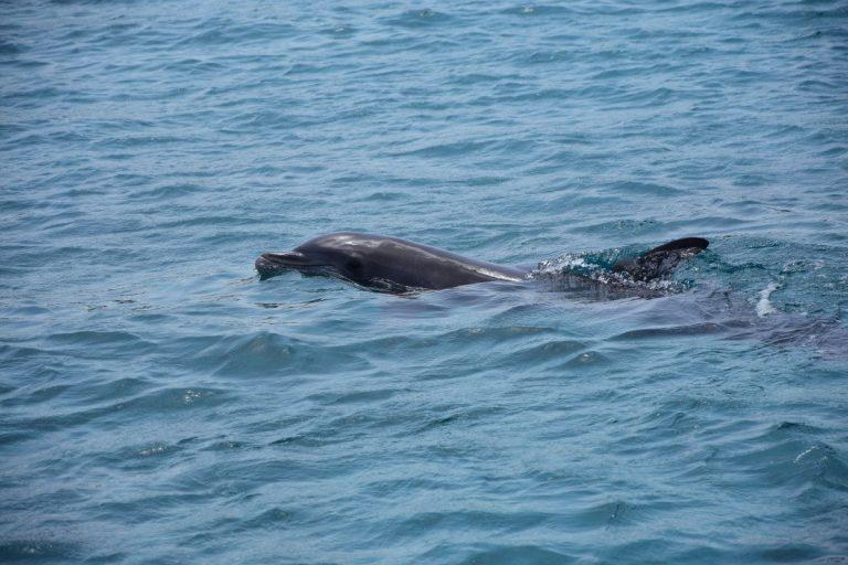Kayaks y delfines en Llança