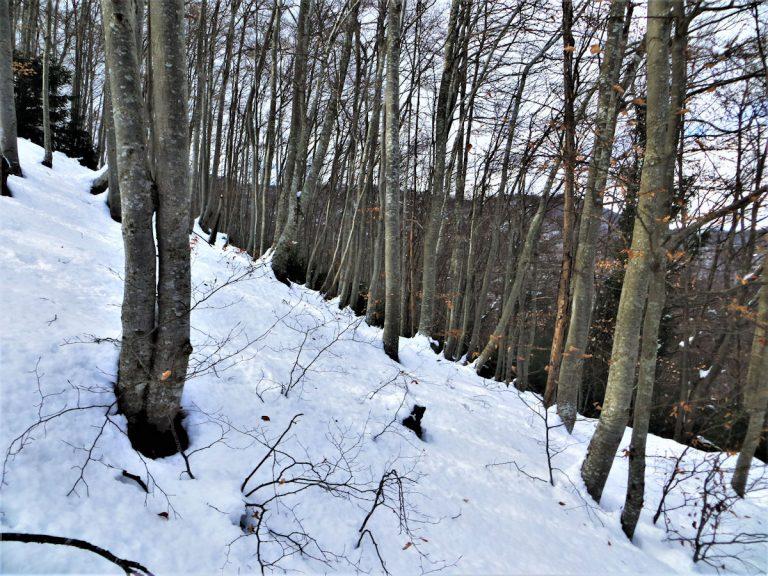 Por los bosques de Riudaura. Paisajes nevados