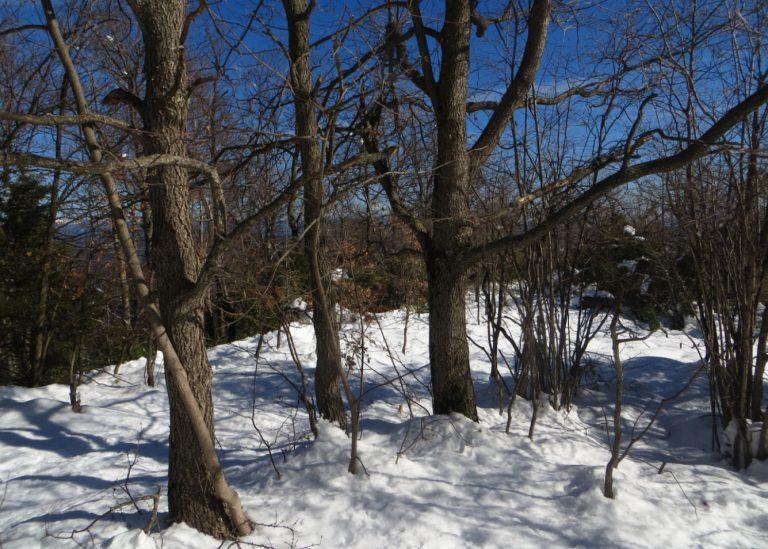 Por los bosques de Riudaura (2). Paisajes nevados