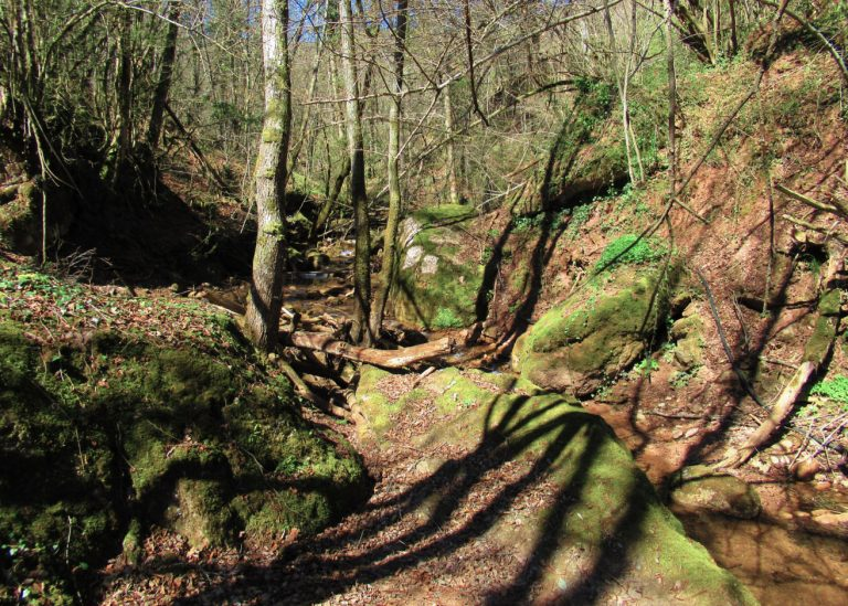 Por los bosques de Riudaura. Riudaura, Santuari de Font de Joan