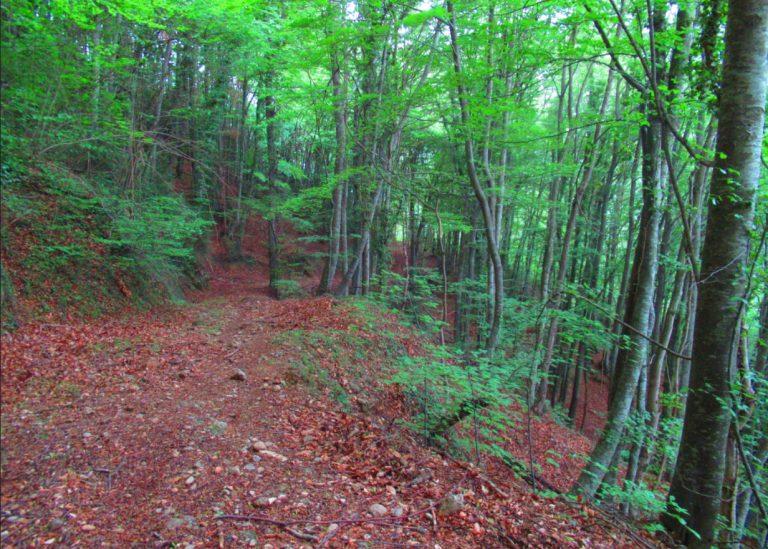 Por los bosques de Riudaura. La Pinya, El Bosc Espès, Coll Sabatalla