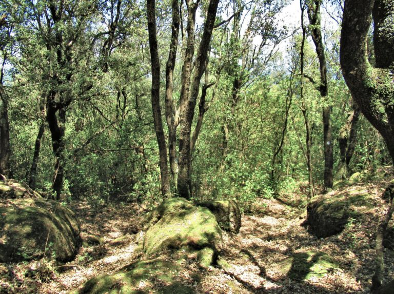 Sant Jaume de Llierca, La Capelleta, Serra de Cogulera, Torrent de Palomers