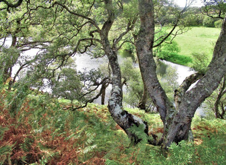 Escocia. Poolewe. Loch na h-Airde Bige