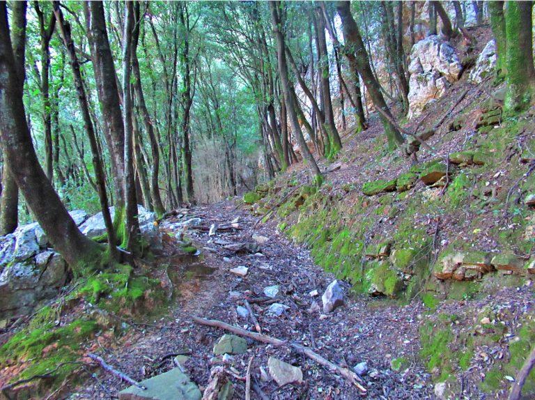 Caminos de Sales de Llierca y Tortellà: Baumes d'en Bicot, Can Bosch y Coma del Roure