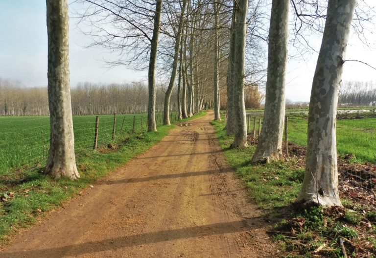 Fotos de la vía verde de Gerona-Bescanò