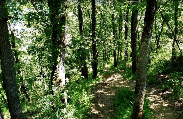 Bianya, Sant Andreu de Socarrats, Sender de la Xeruga, Sant Miquel del Mont, Bosc de Can Guitard