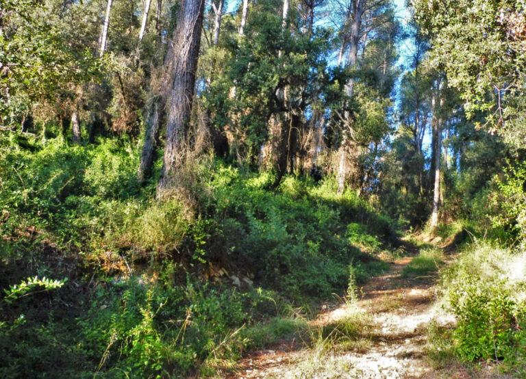 Por los bosques de Celrà y Juià