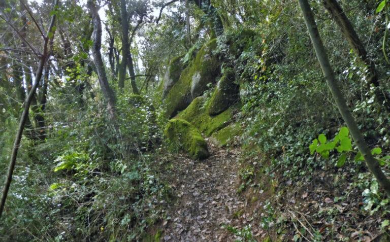 Serra de Malforat. Sant Joan les Fonts, la Cau, Coll de Vivers, Torre Canadell, sender de Costa Rosta